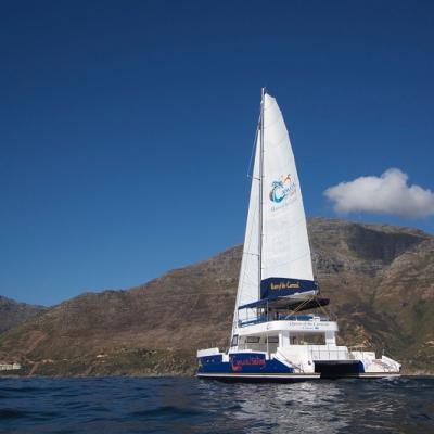 Balance 690 Day Charter Catamaran